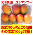 【送料無料】【前予約:7月中ごろ~8月いっぱいにかけて※お届けに時間がかかります】【大浦農園】プチマンゴー500gに今だけ「+100g」増量!