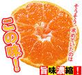 【送料無料】【大浦農園】≪秀優混合≫温州みかん5kg(3L)※大きいサイズです。[前予約:11月中旬頃~12月にかけて発送]