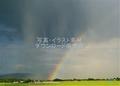 豪雨の中に出た虹(美瑛町)ランクA