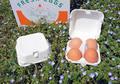再生紙使用の卵用紙パック<4個対応:無地>10枚組