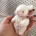 #745 Sweet bunny たっち 刺繍目 ピンク
