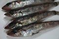 鮮魚:メヒカリ