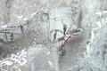 01pwnt_tei_dor-05:パワーネット:ドルンネット:薔薇柄:ホワイト