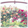 薔薇魔法◆開運コース