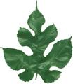 くわの葉(乾燥)20g