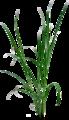 [ハーブシリーズ] レモングラスの葉(乾燥)5g