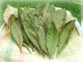 びわの葉(乾燥)40g