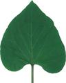さつまいもの葉(乾燥)20g