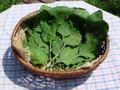 おおばこの葉(乾燥)8g