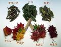 《美味しい ポプリ(秋編)》15g 白樺かじり枝入