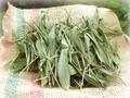 ささの葉(乾燥)40g