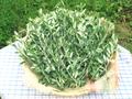 オリーブの葉(乾燥)40g