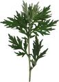 よもぎの葉(乾燥)20g