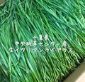 千葉県中央牧草センター産生イタリアンライグラス100g