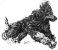 2000 Afghan Hound Plate