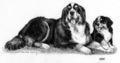2002 Bernese Mountain Dog Plate