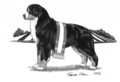 2005 Bernese Mountain Dog