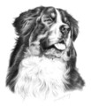 2008 Bernese Mountain Dog