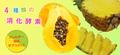 キャバリアの消化不良や下痢をサポート:エンザイム