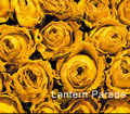 Lantern Parade / 『LANTERN PARADE』 (ROSE 23/CD ALBUM)