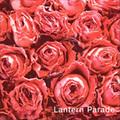 Lantern Parade / 『悲しくてやりきれない』 (ROSE 12X/ANALOG 7INCH)