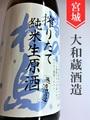 雪の松島 純米無濾過生原酒★しぼりたて★1.8L