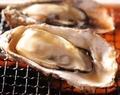 兵庫産 殻つき牡蠣