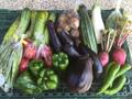 野菜BOX KINGサイズ