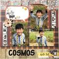 508「COSMOS」