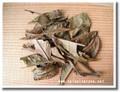秋冬ばん茶100g<晩茶>