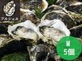 いわがき春香丸ごと凍結Mサイズ5個セット<水産物応援商品>