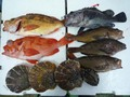 鮮魚セット5000