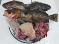 その日のおすすめ根魚鍋セット5000