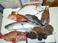 鮮魚セット15000