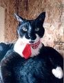 猫ネクタイ