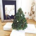 【お教室】12/6針葉樹のクリスマスツリー