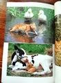 ムツゴロウの猫読本■サイン本