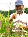 上野さんのコシヒカリ(玄米) 5kg