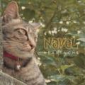 """NAVEL """"HEARTACHE""""  CD"""