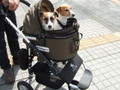 Air Buggy for Dog        SMサイズ