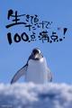 100点満点(ペンギン)