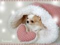 プードルファーのぬくぬく寝袋 【Mサイズ】ホワイト