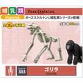 ポーズスケルトン哺乳類シリーズ03ゴリラ