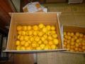柚子玉 1箱 約10kg入り