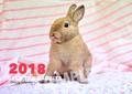 《印字ミス・アウトレット》SAVE THE RABBITS チャリティーカレンダー2018(壁掛け)