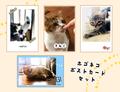 保護猫ポストカードセット