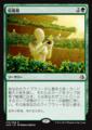 収穫期/Harvest Season/AKH-170/R/緑