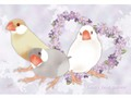 ポストカード Lovely Java sparrow