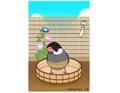 ポストカード 水浴び桜文鳥