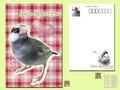 ポストカード 桜文鳥・1